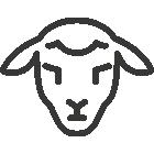Vente de viande d'agneau plein air en ligne, éleveurs locaux
